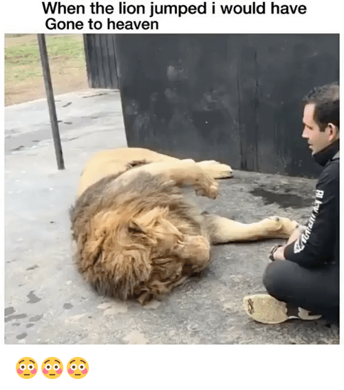 Heaven, Lion, and Dank Memes: When the lion jumped i would have  Gone to heaven 😳😳😳