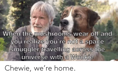the universe: When the mushrooms wear off and  you realize you're not a space  smuggler travelling across the  universe with a Wookie Chewie, we're home.