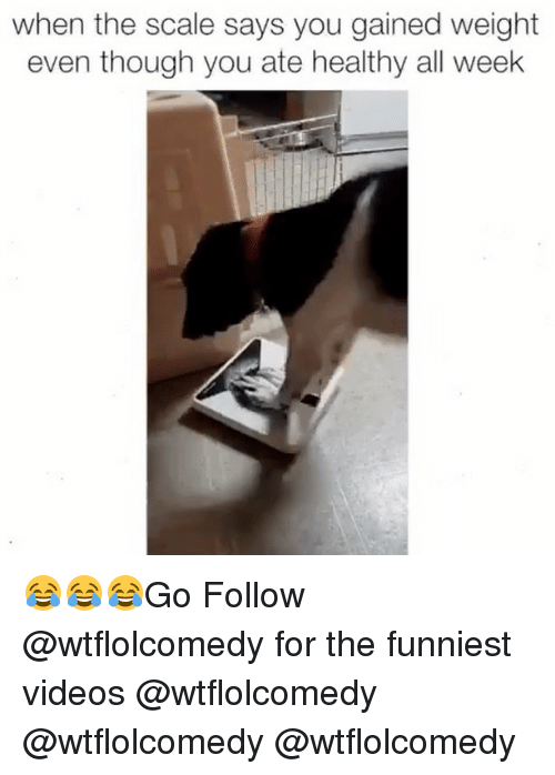 Memes, 🤖, and Gain: when the scale says you gained weight  even though you ate healthy all week 😂😂😂Go Follow @wtflolcomedy for the funniest videos @wtflolcomedy @wtflolcomedy @wtflolcomedy