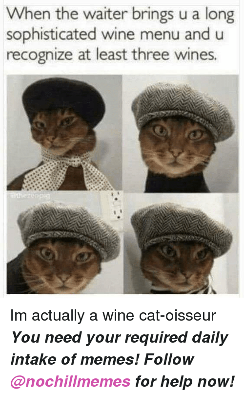 wines: When the waiter brings u a long  sophisticated wine menu and u  recognize at least three wines <p>Im actually a wine cat-oisseur</p><p><b><i>You need your required daily intake of memes! Follow <a>@nochillmemes</a>​ for help now!</i></b><br/></p>