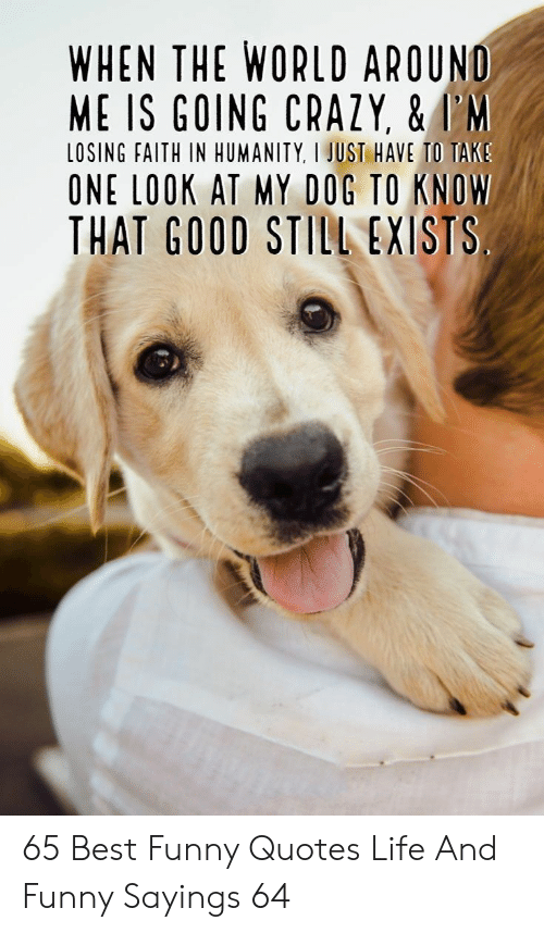 tak: WHEN THE WORLD AROUND  ME IS GOING CRAZY, &I'M  LOSING FAITH IN HUMANITY, I JUST HAVE TO TAK  ONE LOOK AT MY DOG TO KNOW  THAT GOOD STILL EXISTS 65 Best Funny Quotes Life And Funny Sayings 64