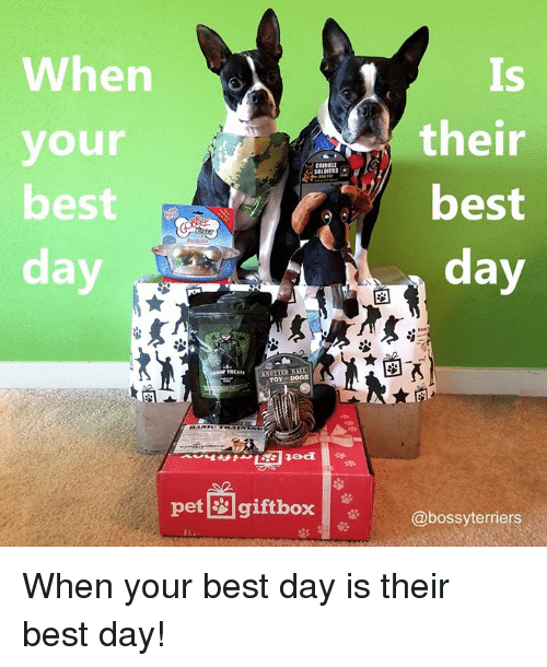 Boxing, Memes, and Soldiers: When  their  your  SOLDIERS  best  best  day  TOYS Doas  Bad  pet gift box  @bossyterriers When your best day is their best day!