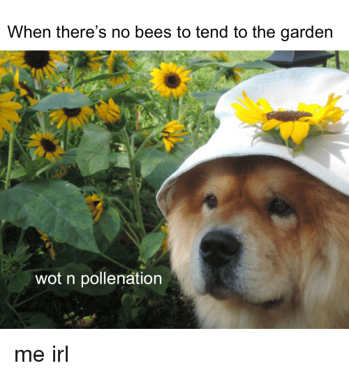 When there 39 s no bees to tend to the garden wot n pollenation me irl irl meme on sizzle for Tending to the garden