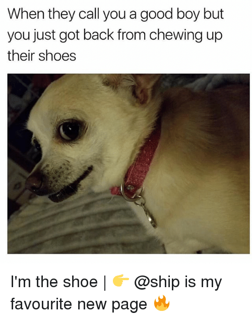Memes, Shoes, and Good: When they call you a good boy but  you just got back from chewing up  their shoes I'm the shoe | 👉 @ship is my favourite new page 🔥