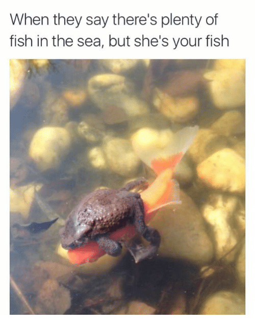 Plenty of Fish: When they say there's plenty of  fish in the sea, but she's your fish