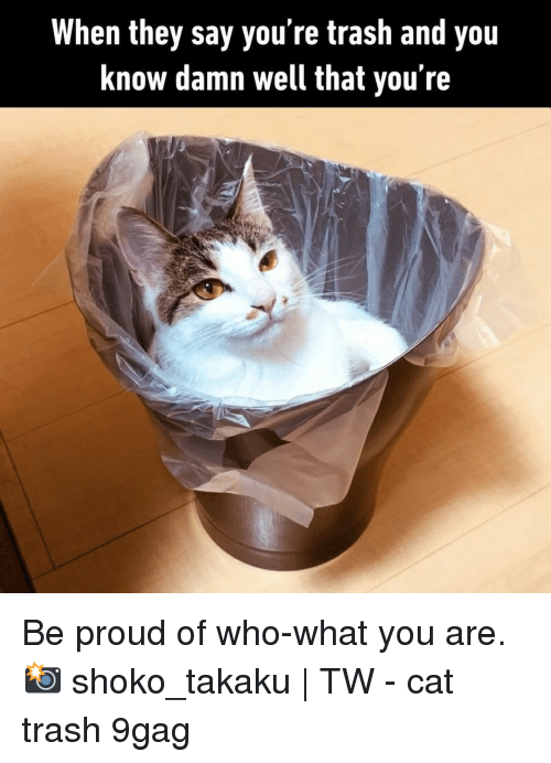 Youre Trash: When they say you're trash and you  know damn well that you're Be proud of who-what you are.⠀ 📸 shoko_takaku | TW⠀ -⠀ cat trash 9gag