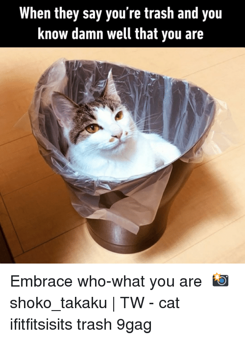 Youre Trash: When they say you're trash and you  Know damn well that you are Embrace who-what you are⠀ 📸 shoko_takaku | TW⠀ -⠀ cat ifitfitsisits trash 9gag