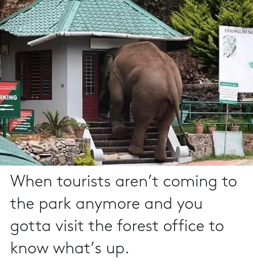 you gotta: When tourists aren't coming to the park anymore and you gotta visit the forest office to know what's up.