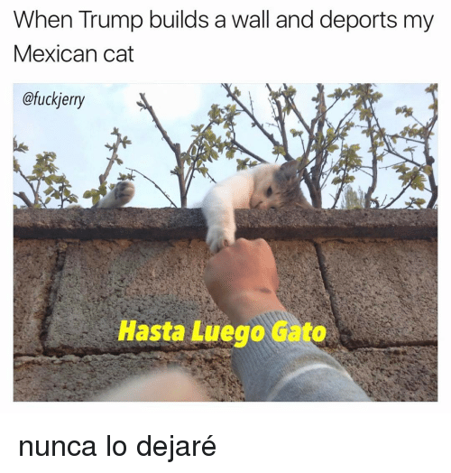 Trump Build A Wall: When Trump builds a wall and deports my  Mexican cat  @fuckierry  Hasta Luego Gato nunca lo dejaré