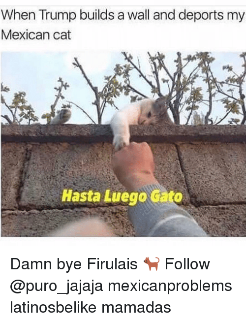 Trump Build A Wall: When Trump builds a wall and deports my  Mexican cat  Hasta Luego Gato Damn bye Firulais 🐈 Follow @puro_jajaja mexicanproblems latinosbelike mamadas