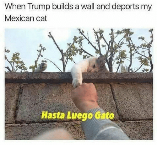 Hasta Luego: When Trump builds a wall and deports my  Mexican cat  Hasta Luego Gato