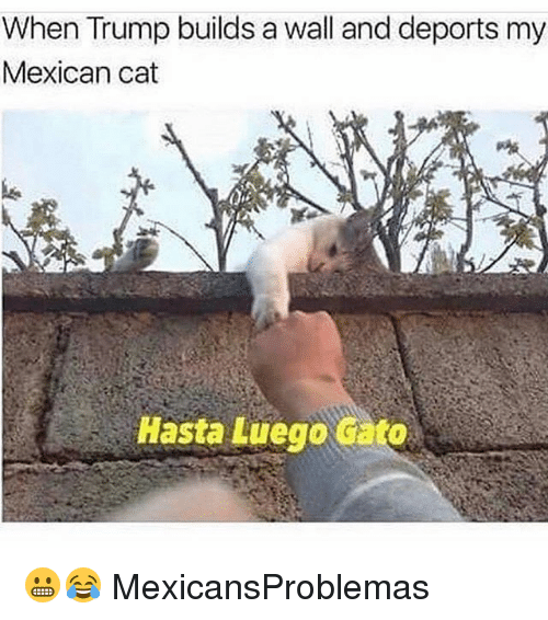 Trump Builds A Wall: When Trump builds a wall and deports my  Mexican cat  Hasta Luego cato 😬😂 MexicansProblemas