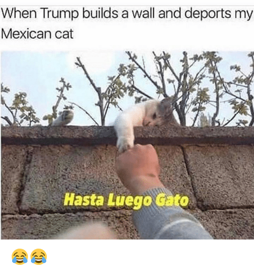 Trump Builds A Wall: When Trump builds a wall and deports my  Mexican cat  Hasta Luego cato 😂😂