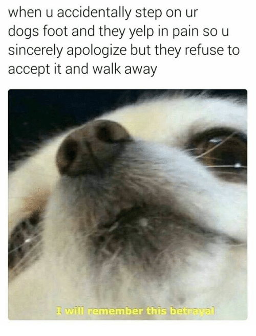 Yelp, Step, and Foot: when u accidentally step on ur  dogs foot and they yelp in pain so u  sincerely apologize but they refuse to  accept it and walk away  ill remember this betrava