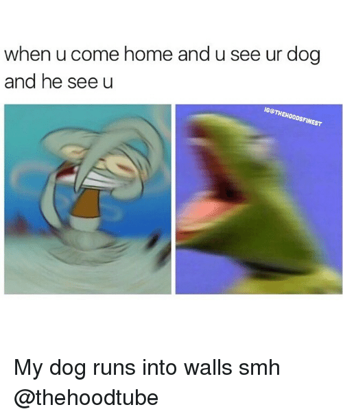 When U Come Home And See Ur Dog