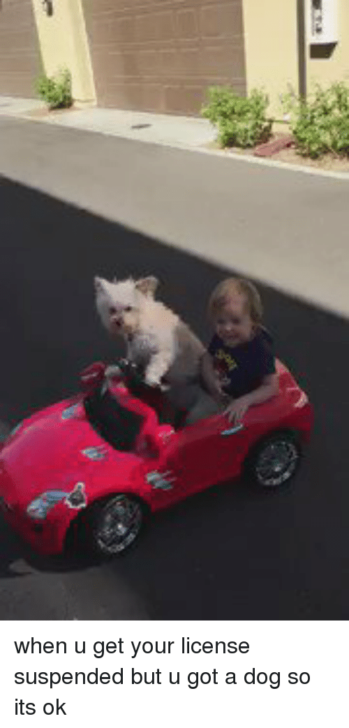 Girl Memes: when u get your license suspended but u got a dog so its ok