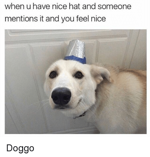Memes, Nice, and 🤖: when u have nice hat and someone  mentions it and you feel nice Doggo