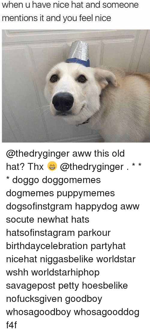 Aww, Memes, and Petty: when u have nice hat and someone  mentions it and you feel nice @thedryginger aww this old hat? Thx 😁 @thedryginger . * * * doggo doggomemes dogmemes puppymemes dogsofinstgram happydog aww socute newhat hats hatsofinstagram parkour birthdaycelebration partyhat nicehat niggasbelike worldstar wshh worldstarhiphop savagepost petty hoesbelike nofucksgiven goodboy whosagoodboy whosagooddog f4f