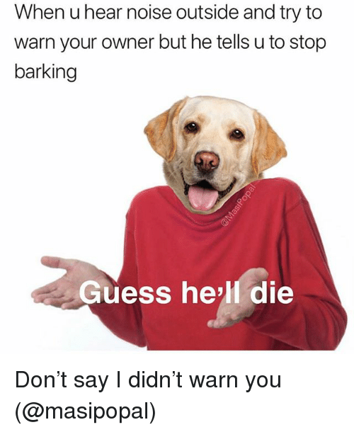 Memes, Guess, and Hell: When u hear noise outside and try to  warn your owner but he tells u to stop  barking  Guess hell die Don't say I didn't warn you (@masipopal)