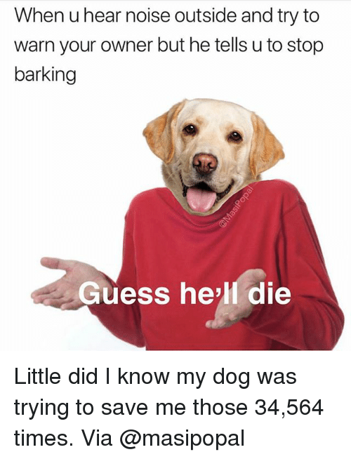 Memes, Guess, and Hell: When u hear noise outside and try to  warn your owner but he tells u to stop  barking  Guess he'll die Little did I know my dog was trying to save me those 34,564 times. Via @masipopal