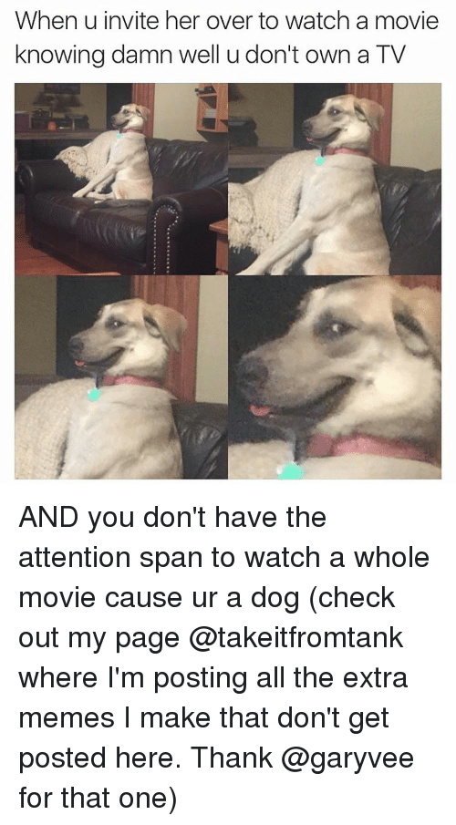attentive: When u invite her over to watch a movie  knowing damn well u don't own a TV AND you don't have the attention span to watch a whole movie cause ur a dog (check out my page @takeitfromtank where I'm posting all the extra memes I make that don't get posted here. Thank @garyvee for that one)