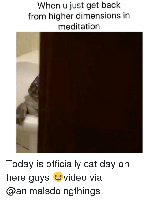 Memes, Meditation, and Today: When u just get back  from higher dimensions in  meditation Today is officially cat day on here guys 😆video via @animalsdoingthings