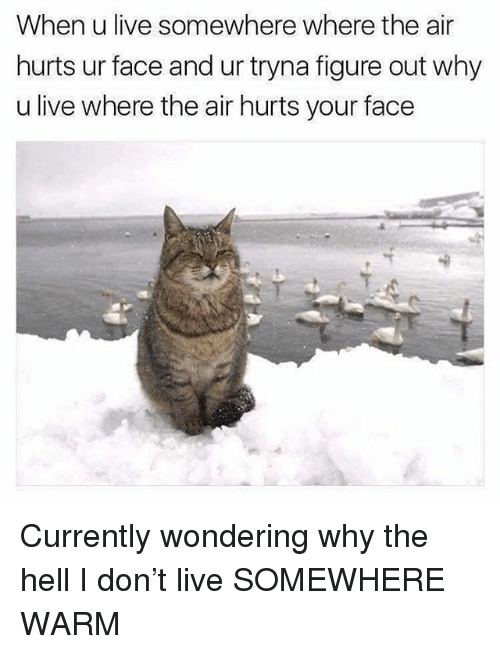 Funny, Live, and Hell: When u live somewhere where the air  hurts ur face and ur tryna figure out why  u live where the air hurts your face Currently wondering why the hell I don't live SOMEWHERE WARM