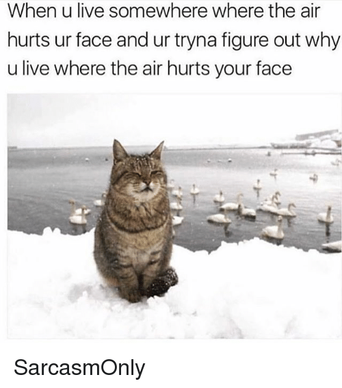 Funny, Memes, and Live: When u live somewhere where the air  hurts ur face and ur tryna figure out why  u live where the air hurts your face SarcasmOnly