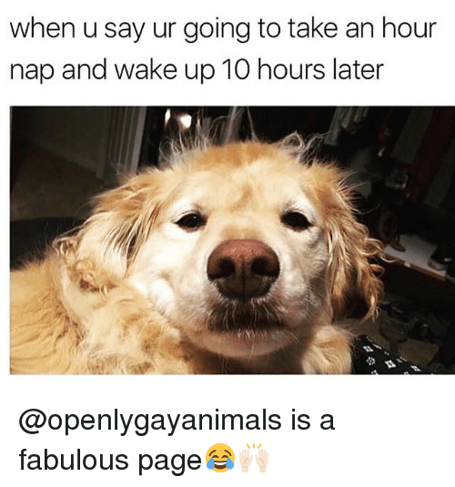 Funny, Page, and Fabulous: when u say ur going to take an hour  nap and wake up 10 hours later @openlygayanimals is a fabulous page😂🙌🏻