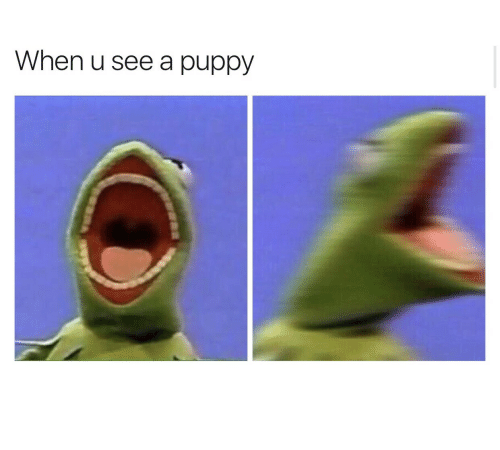 Puppy, When U, and  See: When u see a puppy