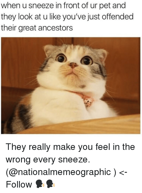 Memes, 🤖, and Pet: when u sneeze in front of ur pet and  they look at u like you've just offended  their great ancestors They really make you feel in the wrong every sneeze. (@nationalmemeographic ) <- Follow 🗣🗣