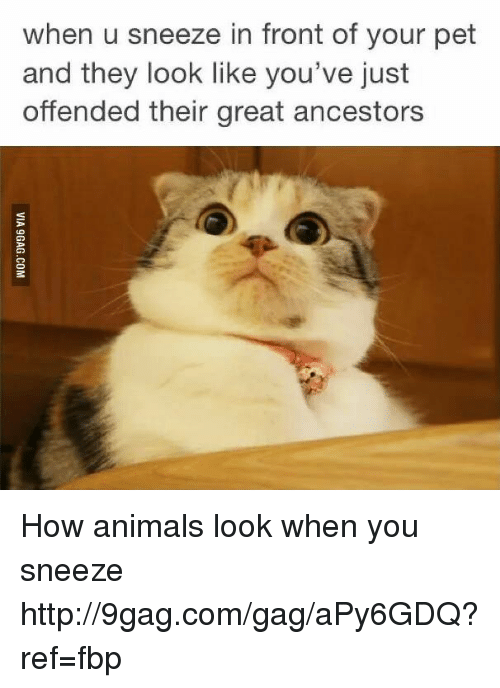 Dank, 🤖, and Pet: when u sneeze in front of your pet  and they look like you've just  offended their great ancestors How animals look when you sneeze http://9gag.com/gag/aPy6GDQ?ref=fbp