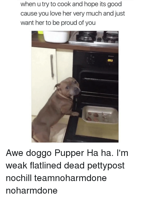 memes: when u try to cook and hope its good  cause you love her very much and just  want her to be proud of you Awe doggo Pupper Ha ha. I'm weak flatlined dead pettypost nochill teamnoharmdone noharmdone
