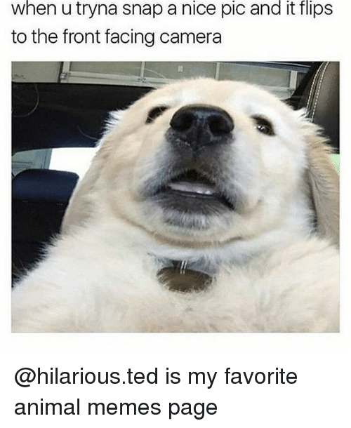 Memes, Ted, and Animal: when u tryna snap a nice pic and it flips  to the front facing camera @hilarious.ted is my favorite animal memes page
