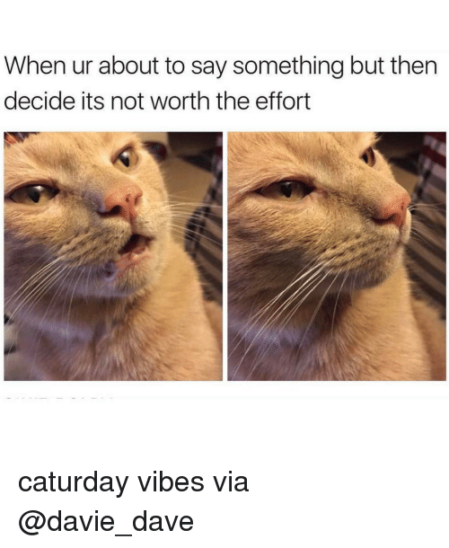 not worth the effort: When ur about to say something but then  decide its not worth the effort caturday vibes via @davie_dave