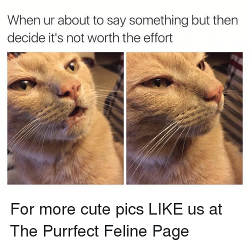 not worth the effort: When ur about to say something but then  decide it's not worth the effort For more cute pics LIKE us at The Purrfect Feline Page
