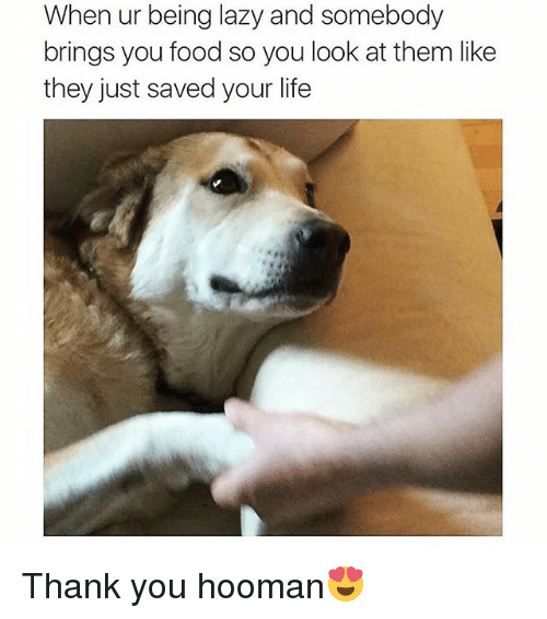Food, Funny, and Lazy: When ur being lazy and somebody  brings you food so you look at them like  they just saved your life Thank you hooman😍