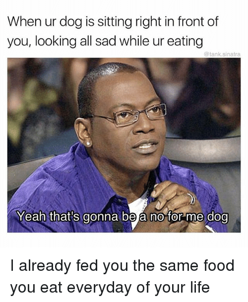 Thats Gonna Be A No For Me Dog: When ur dog is sitting right in front of  you, looking all sad while ur eating  @tank.sinatra  Yeah that's gonna be a no for me dog I already fed you the same food you eat everyday of your life