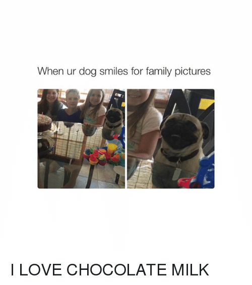 Dog Smile: When ur dog smiles for family pictures I LOVE CHOCOLATE MILK