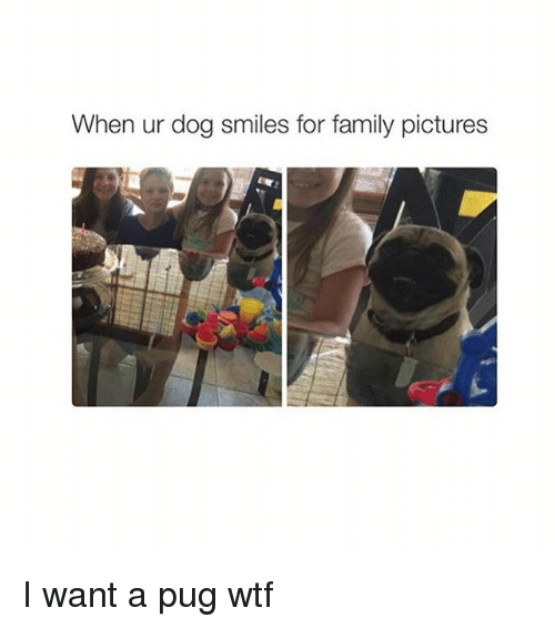 Dog Smile: When ur dog smiles for family pictures I want a pug wtf