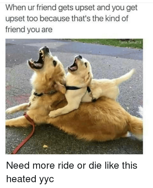 Memes, Heat, and 🤖: When ur friend gets upset and you get  upset too because that's the kind of  friend you are  Tank Sinatra Need more ride or die like this heated yyc
