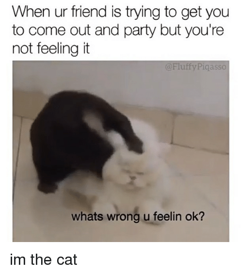 Memes, Party, and 🤖: When ur friend is trying to get you  to come out and party but you're  not feeling it  @Fluffy Piqasso  whats wrong u feelin ok? im the cat