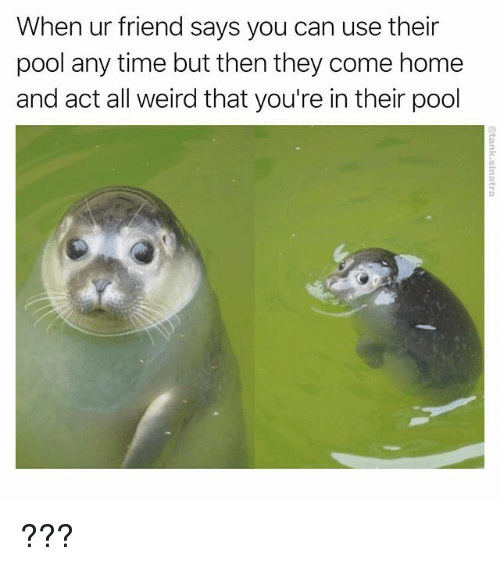 Funny, Weird, and Home: When ur friend says you can use their  pool any time but then they come home  and act all weird that you're in their pool ???