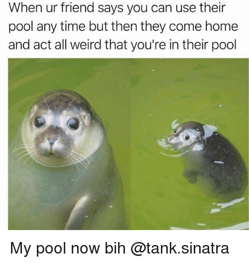Weird, Home, and Pool: When ur friend says you can use their  pool any time but then they come home  and act all weird that you're in their pool My pool now bih @tank.sinatra