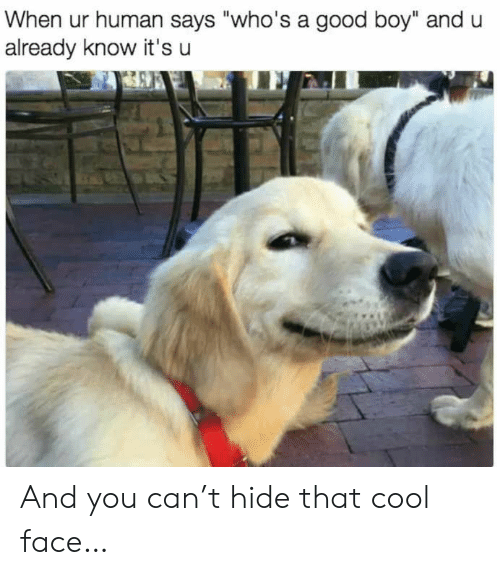 """Whos A Good Boy: When ur human says """"who's a good boy"""" and u  already know it's u And you can't hide that cool face…"""