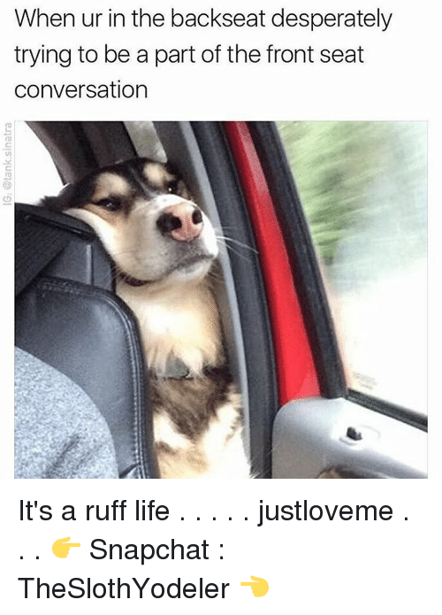 conversating: When ur in the backseat desperately  trying to be a part of the front seat  conversation It's a ruff life . . . . . justloveme . . . 👉 Snapchat : TheSlothYodeler 👈