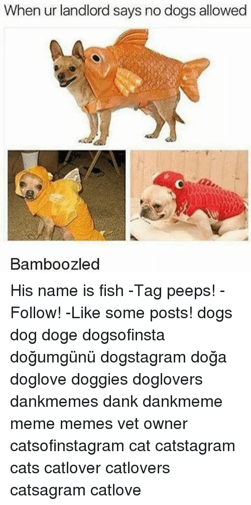 When ur landlord says no dogs allowed bamboozled his name for Is fish good for dogs