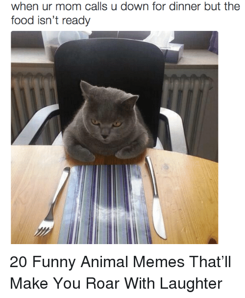 funny animal memes: when ur mom calls u down for dinner but the  food isn't ready 20 Funny Animal Memes That'll Make You Roar With Laughter