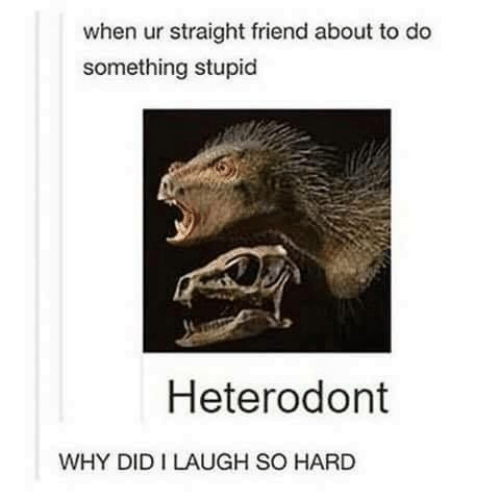 laugh-so-hard: when ur straight friend about to do  something stupid  Heterodont  WHY DID I LAUGH SO HARD
