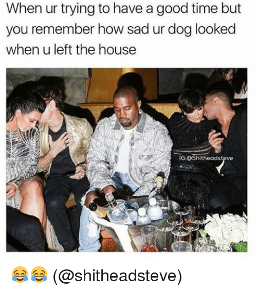 Memes, Good, and House: When ur trying to have a good time but  you remember how sad ur dog looked  when u left the house  IG:OShitheadsteve 😂😂 (@shitheadsteve)
